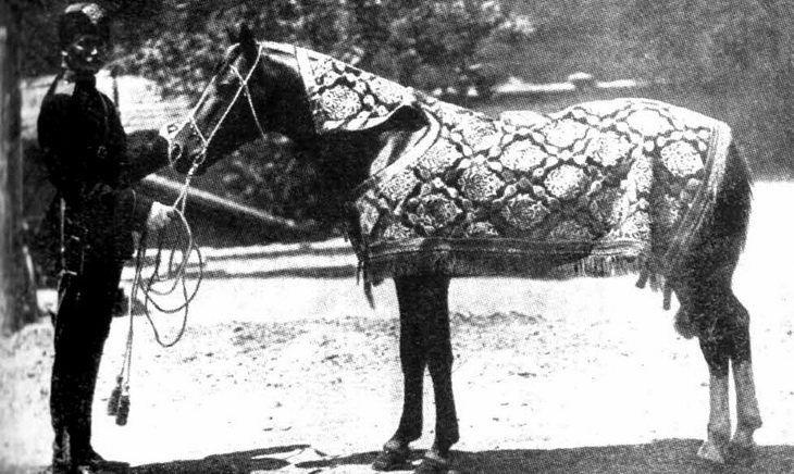 «Карабахская лошадь Гюльгюн»: история одного экспоната