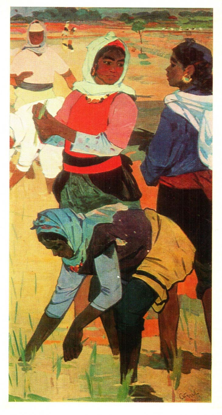 Надир Абдурахманов. На рисовом поле