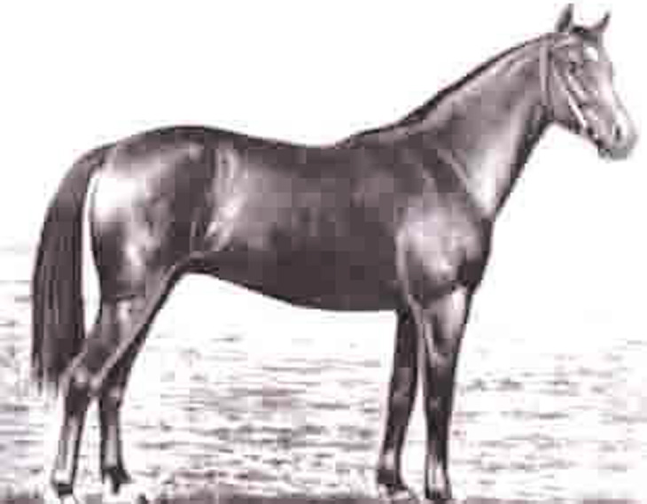 Слава карабахских скакунов: о развитии коневодства в Азербайджане