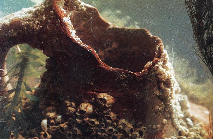 Сокровища на дне Каспия: находки древних городищ Азербайджана 12-13 вв. (ФОТО)