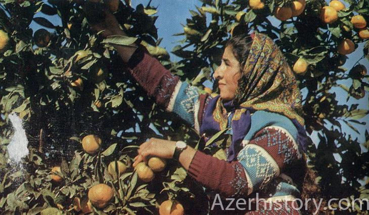 Интересные факты из истории садоводства в Азербайджане
