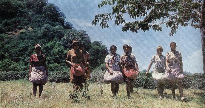 Промышленность и сельское хозяйство Ленкорани из альбома 1975 г. (ФОТО)