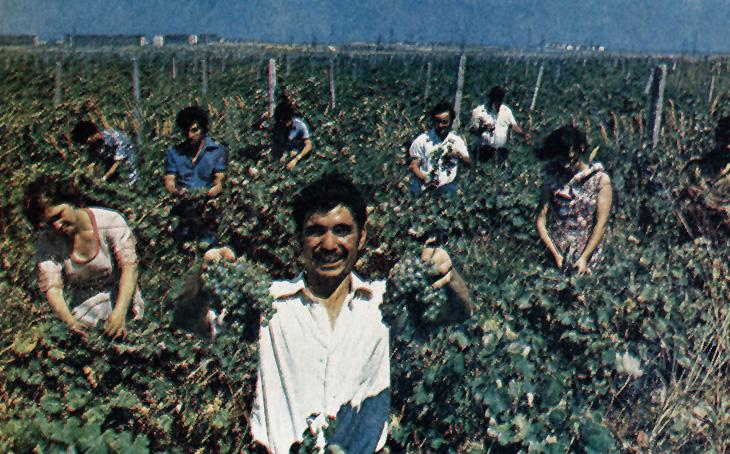 Наука, медицина и сельское хозяйство Сумгаита конца 1970-х (ФОТО)