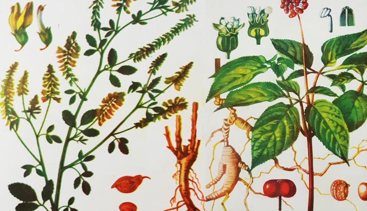 Исторический обзор развития народной и научной медицины в Азербайджане
