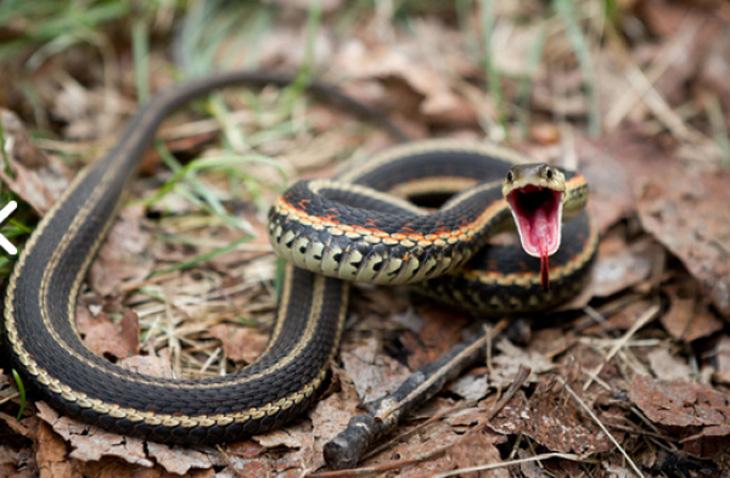 Народное поверье о бузовнинских змеях или почему в сады не заходили по пятницам