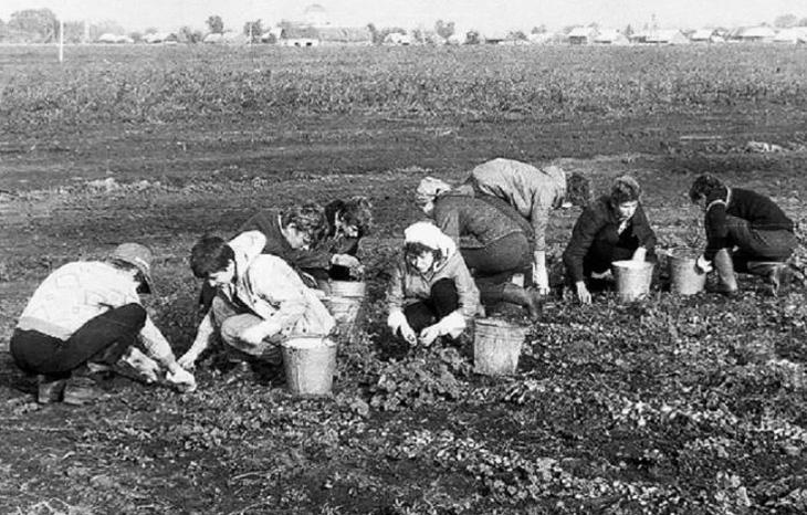 Как в советском Азербайджане собирали и хранили лекарственные растения