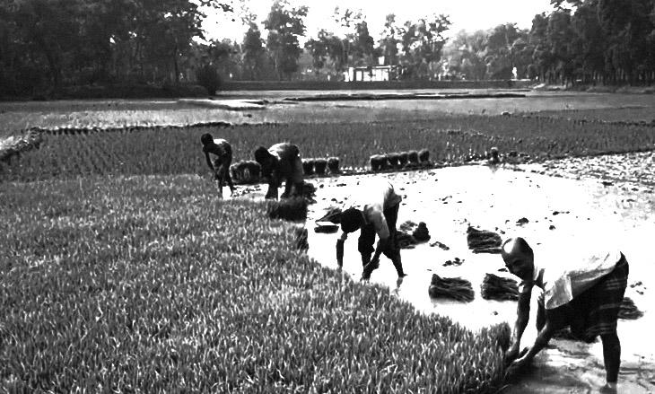 Чалтыководство: о культуре риса в Ленкоранском крае Азербайджана (записано в 1933 г.)