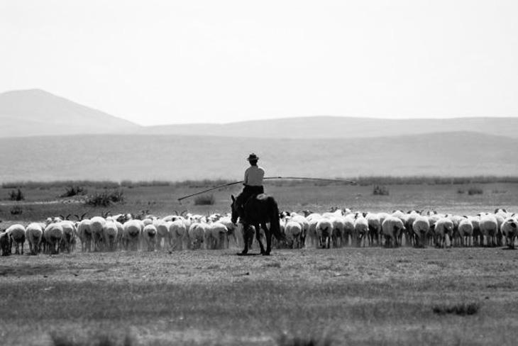 Интересные детали о скотоводстве в Ленкоранском округе Азербайджана (конец XIX в.)
